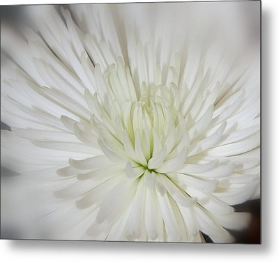 Simple Beauty Metal Print by Shannon McMannus