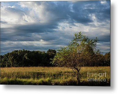 Metal Print featuring the photograph Simplicity by Iris Greenwell