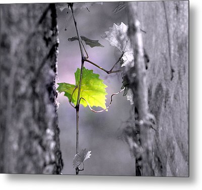 Simplicity Metal Print by Jennifer  Diaz