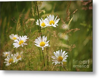 Simplicity Metal Print by Sheila Ping