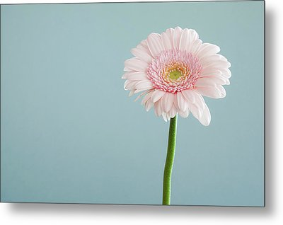 Simply Beautiful Metal Print by Happy Home Artistry