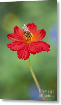 Simply Bee Metal Print by Tim Gainey