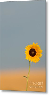 Simply Kansas Metal Print