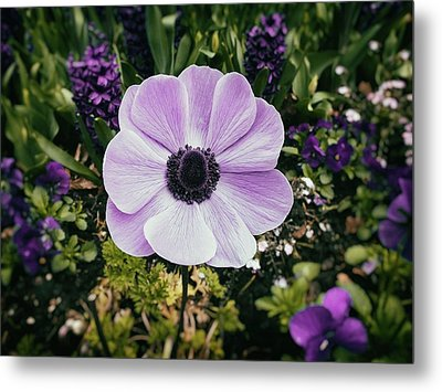 Simply Sweet Metal Print by Karen Stahlros