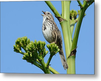 Metal Print featuring the photograph Sing A Song by Fraida Gutovich