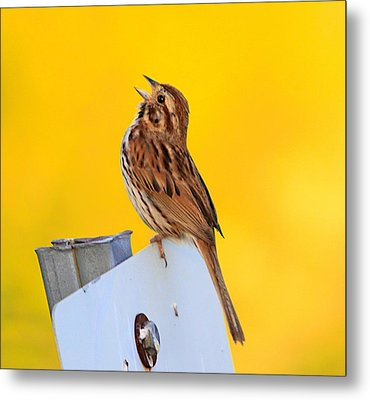 Sing It Out Metal Print by Robert Pearson