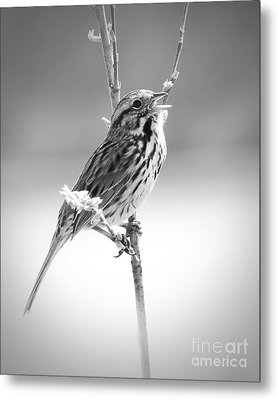 Sing Me A Song Metal Print