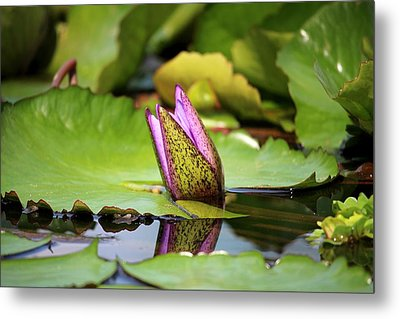 Singapore Bloom Metal Print by Diane Height