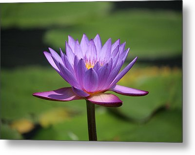 Singapore Flower Metal Print by Diane Height
