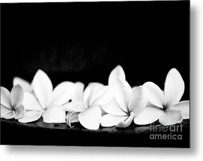Singapore White Plumeria Flowers The Fragrance Of Hawaii Metal Print by Sharon Mau