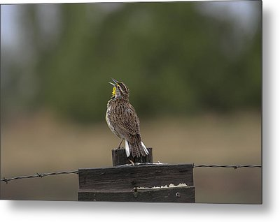 Metal Print featuring the photograph Singing A Morning Song by Monte Stevens