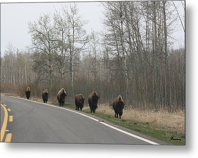 Single File Now Metal Print by Andrea Lawrence