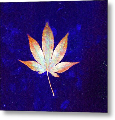 Single Leaf With Blue Background  Metal Print