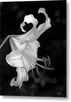Single Lily In Black And White. Metal Print