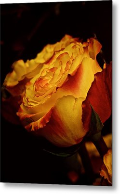 Metal Print featuring the photograph Single March Vintage Rose by Richard Cummings