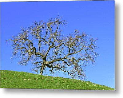 Metal Print featuring the photograph Single Oak Tree by Art Block Collections