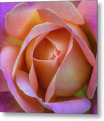 Metal Print featuring the photograph Single Peach Pink Rose by Julie Palencia