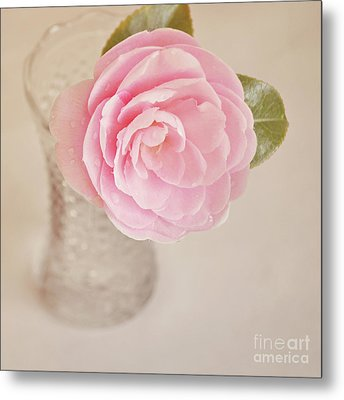Single Pink Camelia Flower In Clear Vase Metal Print