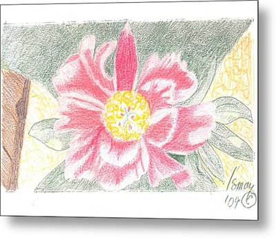 Metal Print featuring the drawing Single Pink Peone - 2 by Rod Ismay