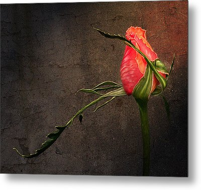 Single Rose Metal Print by Ann Lauwers