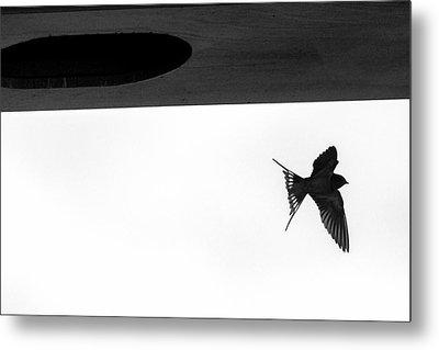 Single Swallow Flying Under Bridge Metal Print by Dan Friend