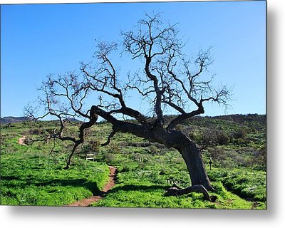 Single Tree Over Narrow Path Metal Print