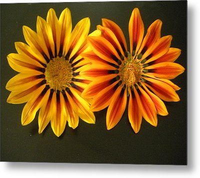 Sisters Metal Print by Jeanette Oberholtzer