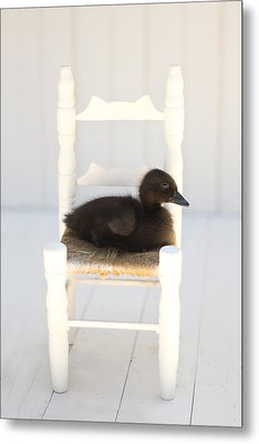 Sitting Duck Metal Print by Amy Tyler