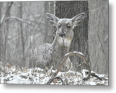 Sitting Out The Storm Metal Print by Michael Peychich