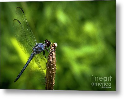 Metal Print featuring the photograph Sitting Pretty 2 Dragonfly Art by Reid Callaway