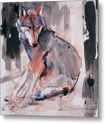 Sitting Wolf Metal Print by Mark Adlington