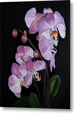 Six Orchids Metal Print by Sandra Nardone