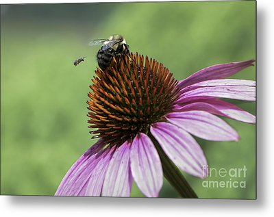 Metal Print featuring the photograph Size Matters by Andrea Silies