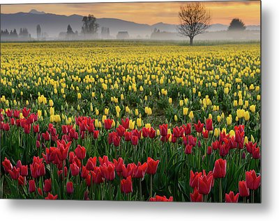 Metal Print featuring the photograph Skagit Valley Misty Morning by Dan Mihai
