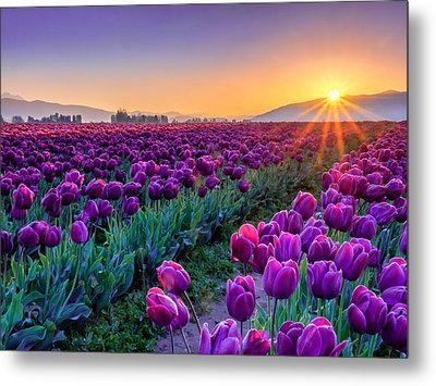 Skagit Valley Sunrise Metal Print