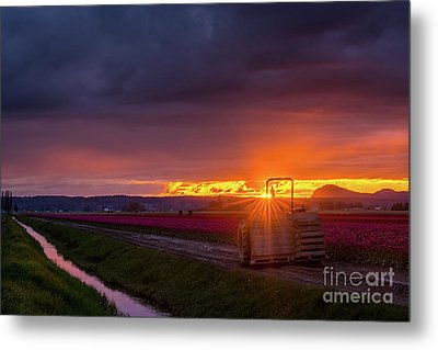Metal Print featuring the photograph Skagit Valley Tractor Sunstar by Mike Reid