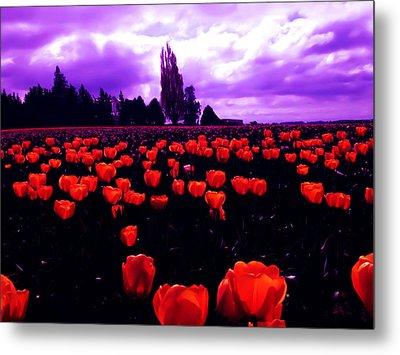 Skagit Valley Tulips Metal Print by Eddie Eastwood