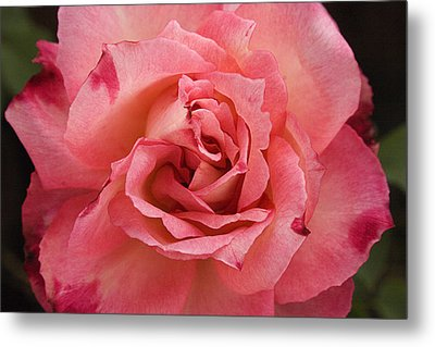 Skc 4942 The Pink Harmony Metal Print