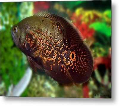 Metal Print featuring the photograph Skeeter by Betty Northcutt