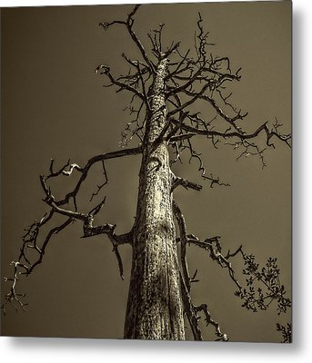Skeletal Tree Sedona Arizona Metal Print