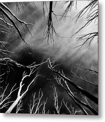 Skeleton Trees  Metal Print