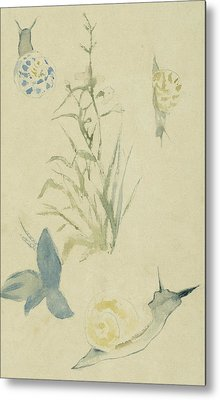Sketches Of Snails, Flowering Plant Metal Print