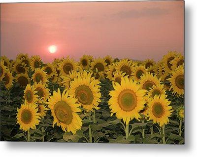 Skn 2179 Sunflower Landscape Metal Print