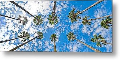 Skyward Palms Metal Print