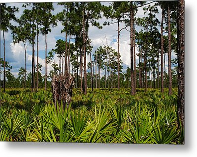 Slash Pine And Saw Palmetto Metal Print by Steven Scott