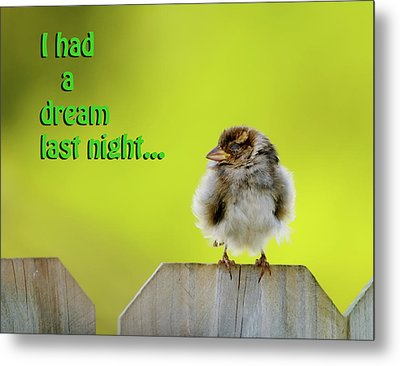 Sleeping Baby Sparrow Metal Print by Betty LaRue