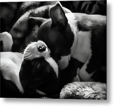 Sleeping Beauties - Boston Terriers Metal Print