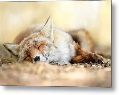 Sleeping Beauty -red Fox In Rest Metal Print by Roeselien Raimond