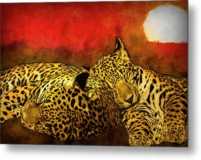 Sleeping Cats Metal Print
