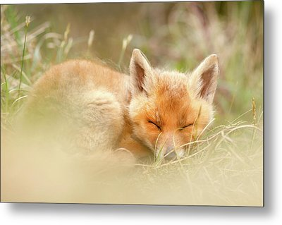 Sleeping Cutie - Red Fox Kit Asleep Metal Print by Roeselien Raimond
